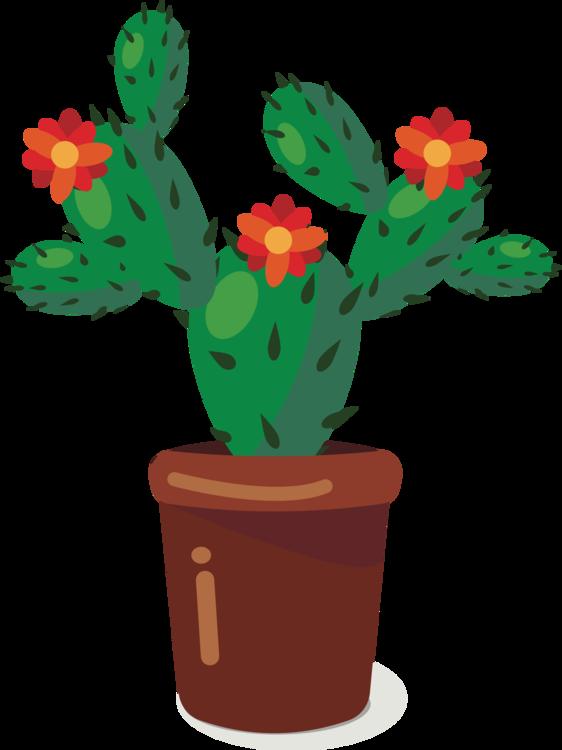 Succulent Plant,Plant,Flower
