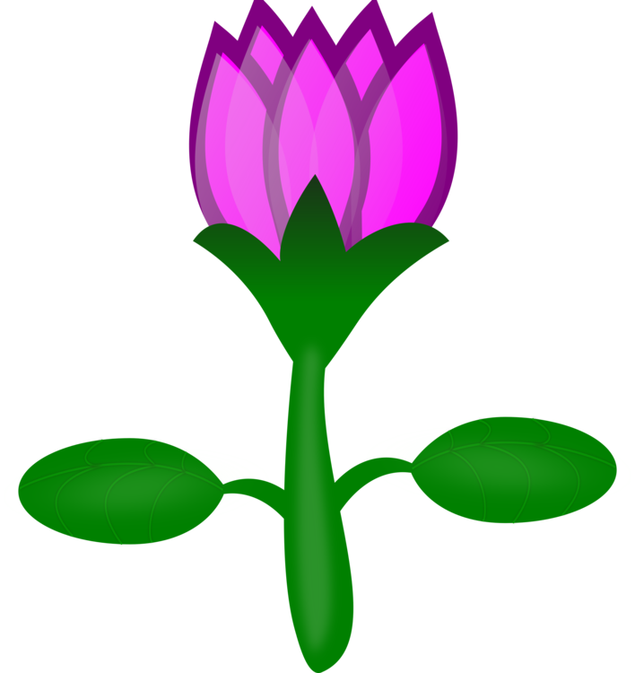 Sacred Lotus Pink Flowers Drawing Cartoon Free Commercial Clipart