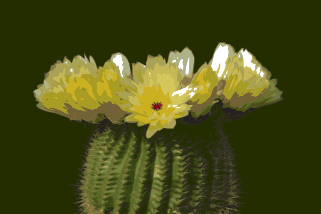 Plant,Flower,Eastern Prickly Pear