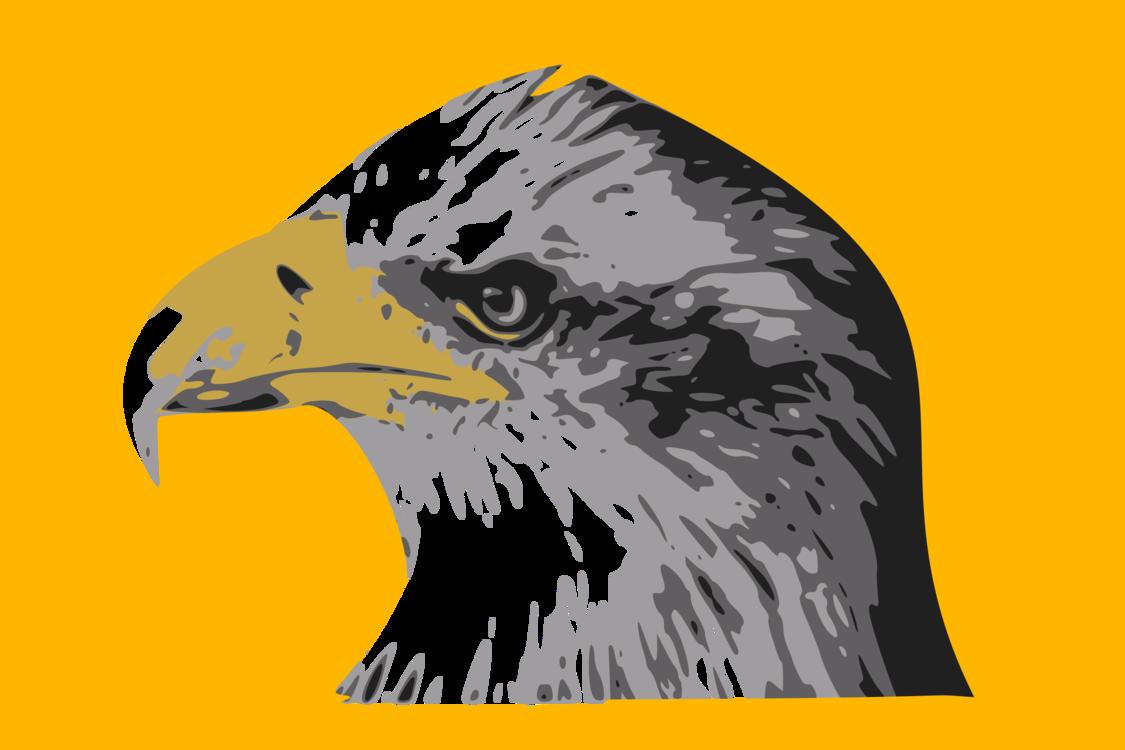Eagle,Hawk,Bald Eagle