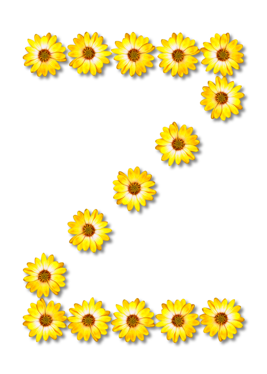 Sunflower Seed,Chrysanths,Flower