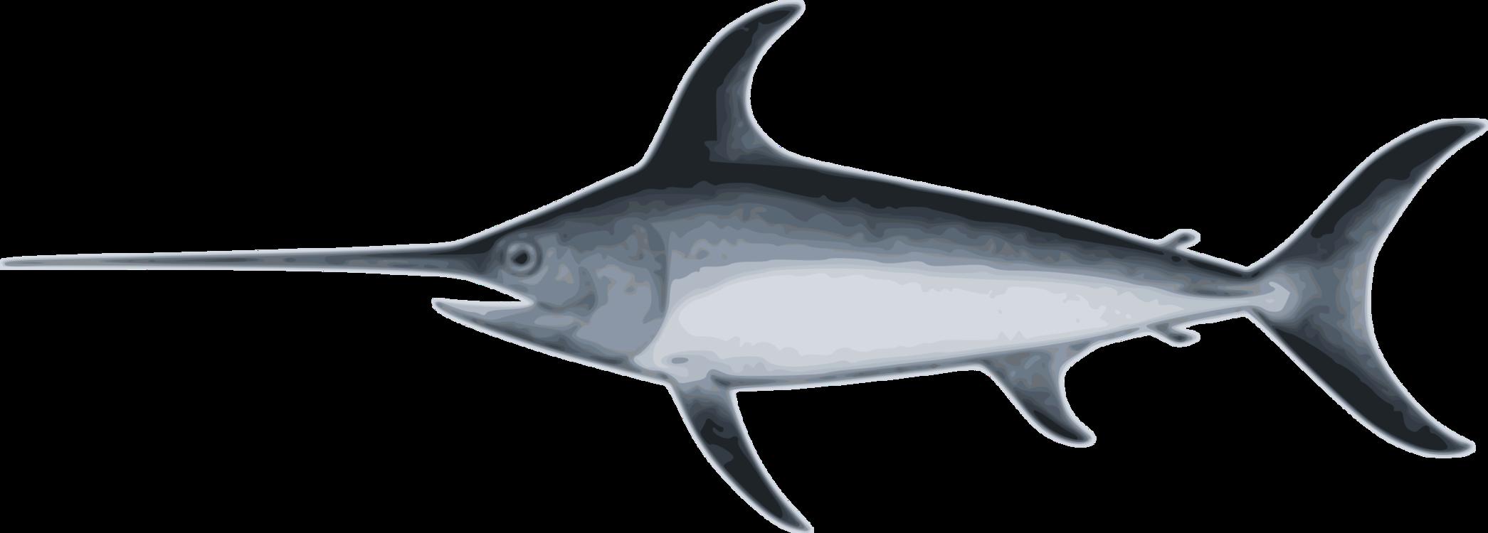 Marine Biology,Shark,Billfish