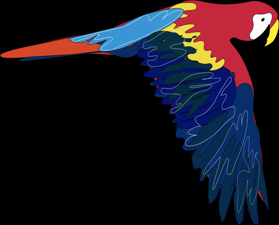 Macaw,Parrot,Vertebrate
