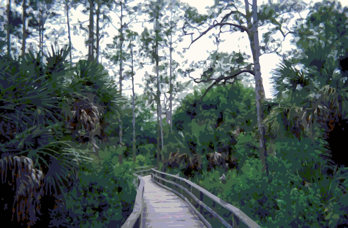Valdivian Temperate Rain Forest,Nature Reserve,Botanical Garden