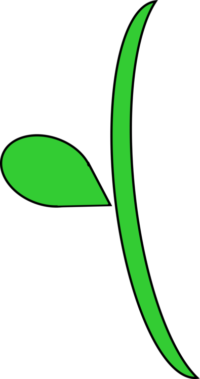 Plant stem Leaf Flowering plant Plants
