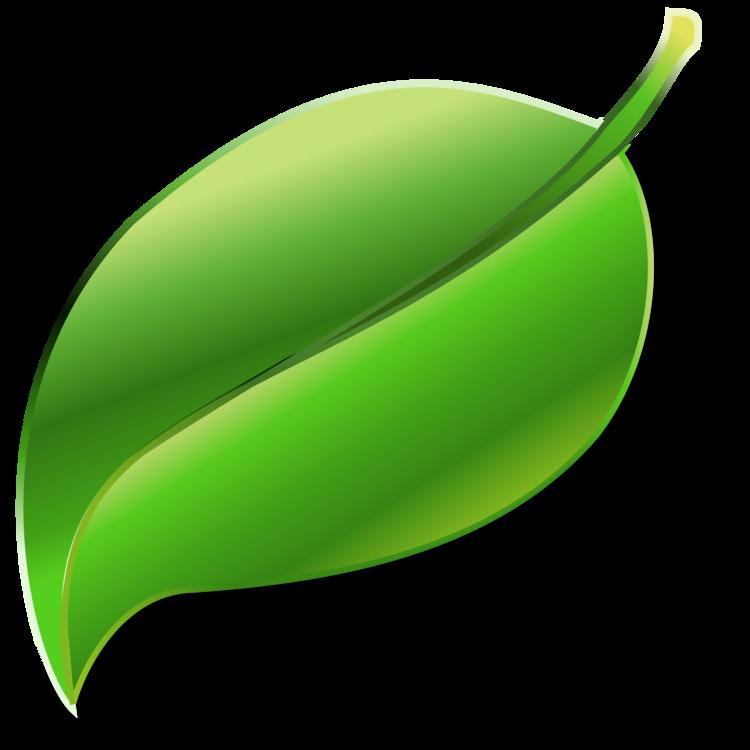 Plant,Leaf,Fruit