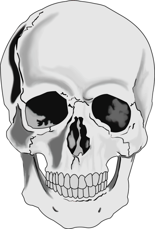 Head,Neck,Skull
