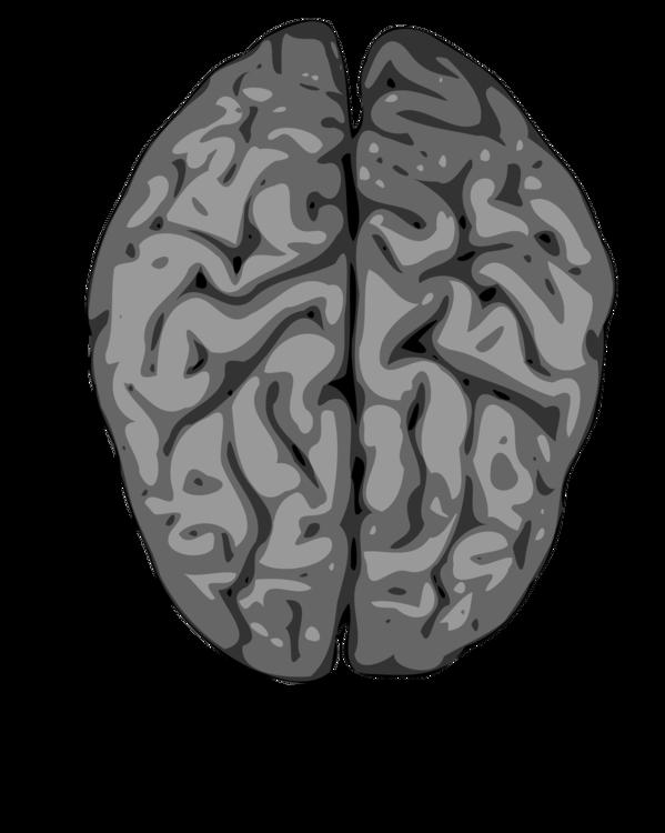Cute Brain And Heart, HD Png Download , Transparent Png Image - PNGitem