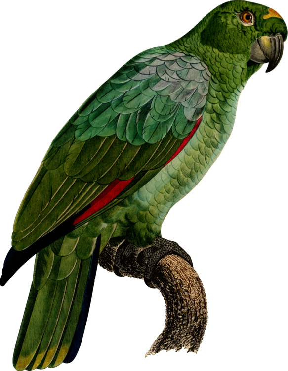 Macaw,Parrot,Wing