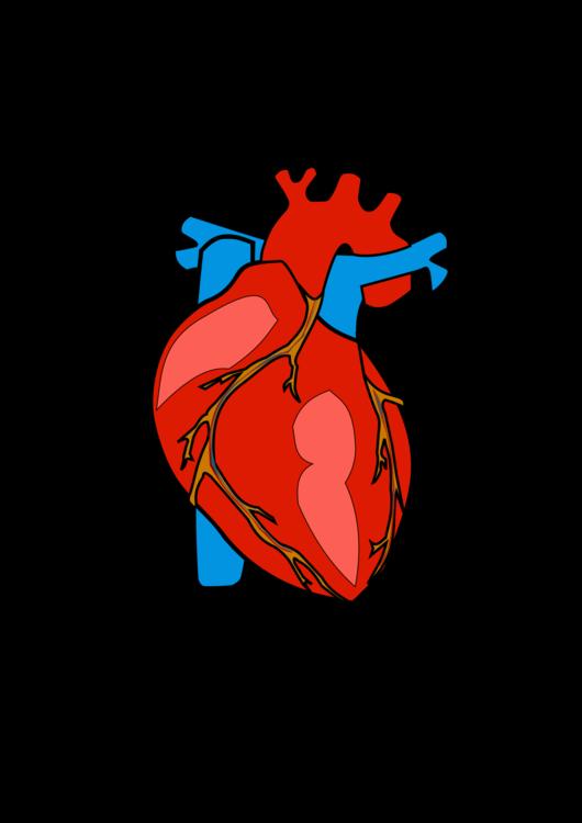 Human body Heart Anatomy Organ free commercial clipart - Human Body ...