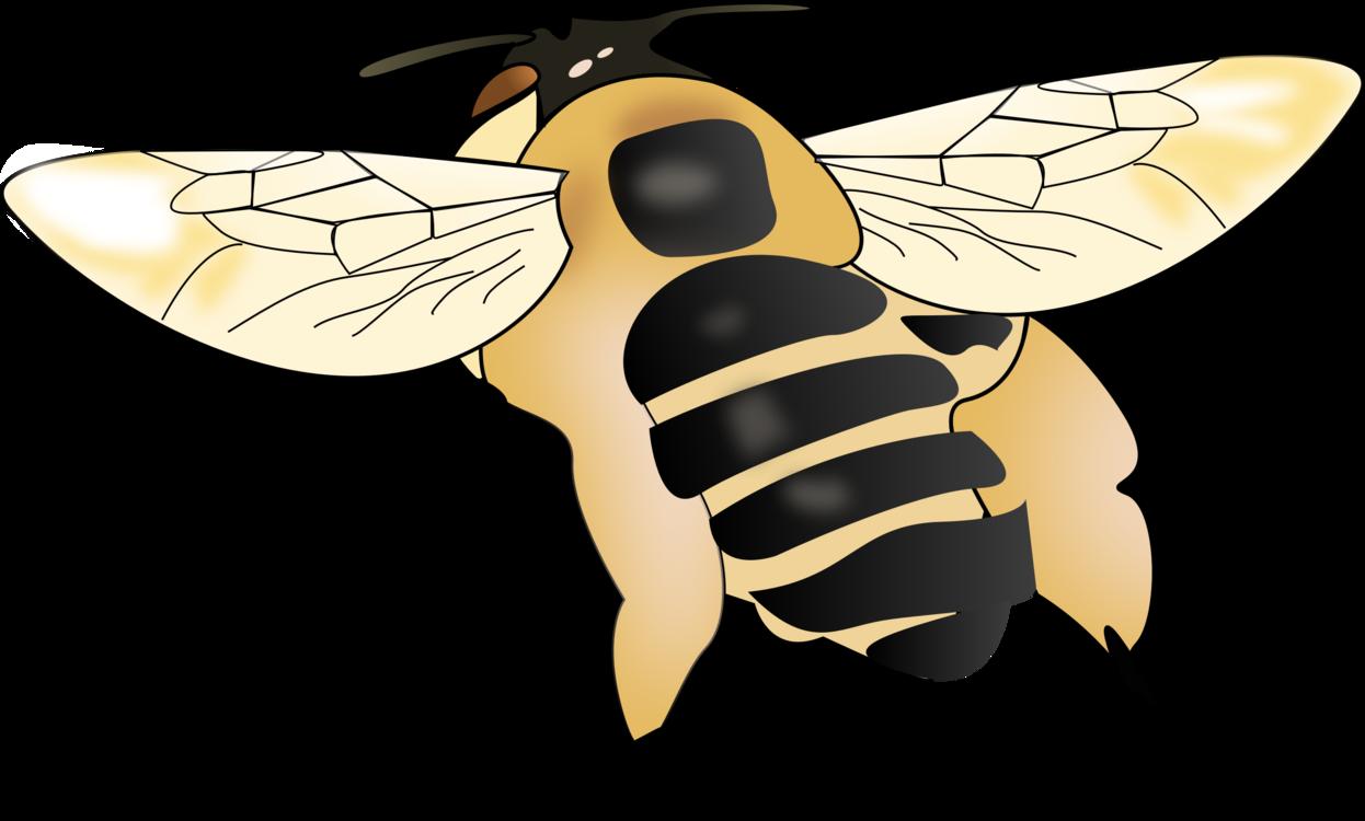 Fly,Honey Bee,Pollinator