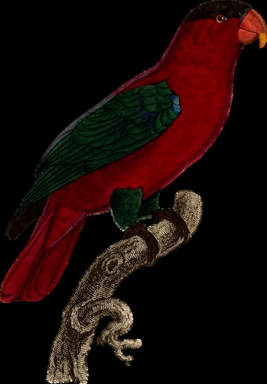 Cuculiformes,Macaw,Parrot