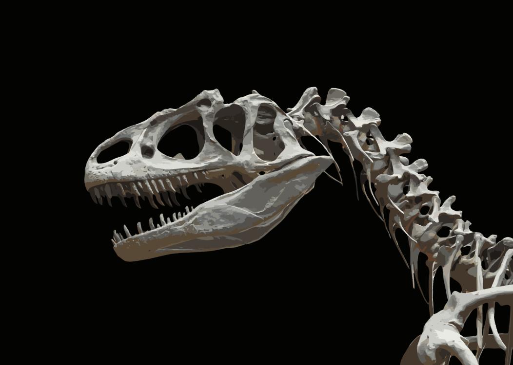 Velociraptor,Skeleton,Skull