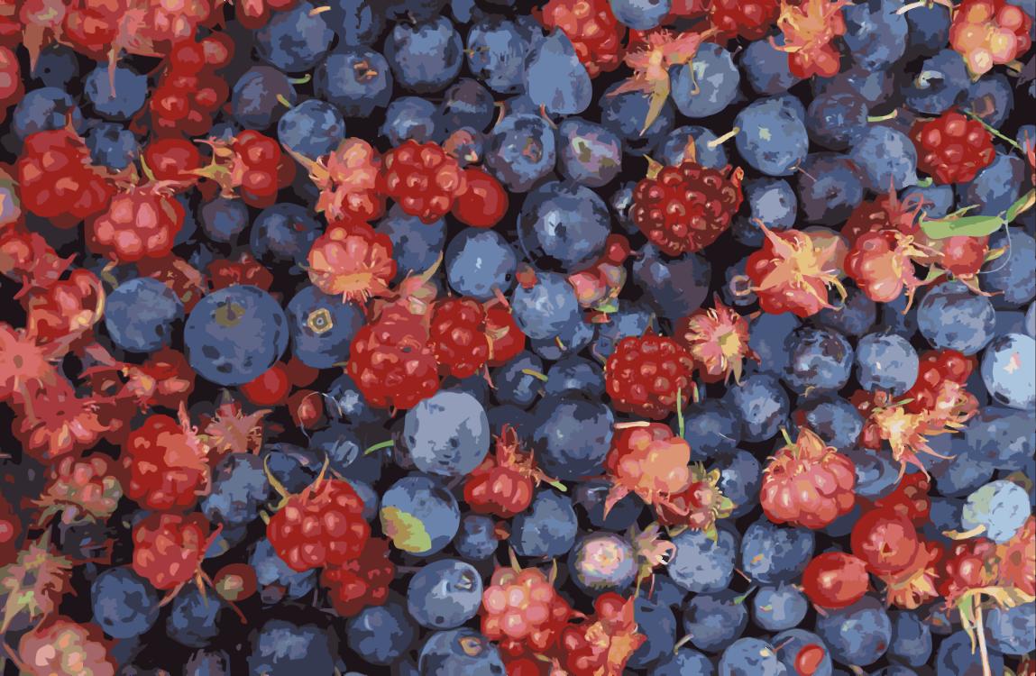 Superfood,Plant,Boysenberry