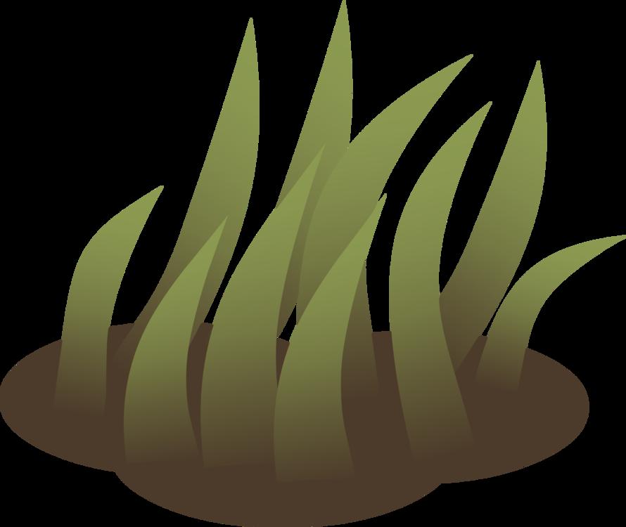 Computer Wallpaper,Plant,Grass