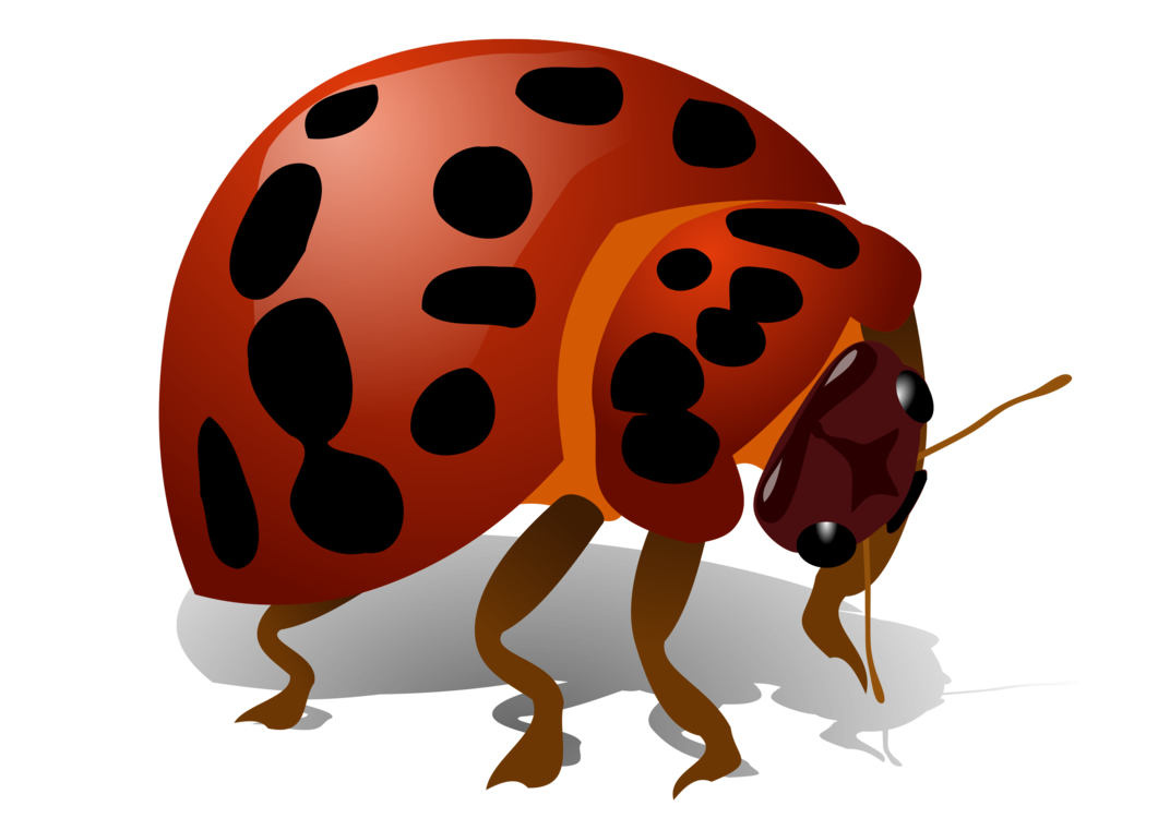 Arthropod,Ladybird,Invertebrate
