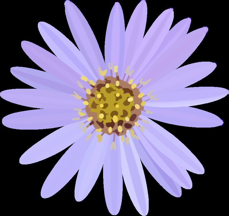 Pollen,Chrysanths,Flower