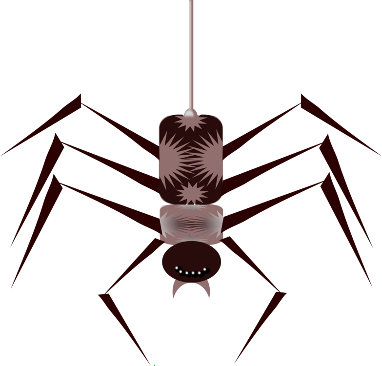 insects and spiders insects and spiders true bugs spiders insects