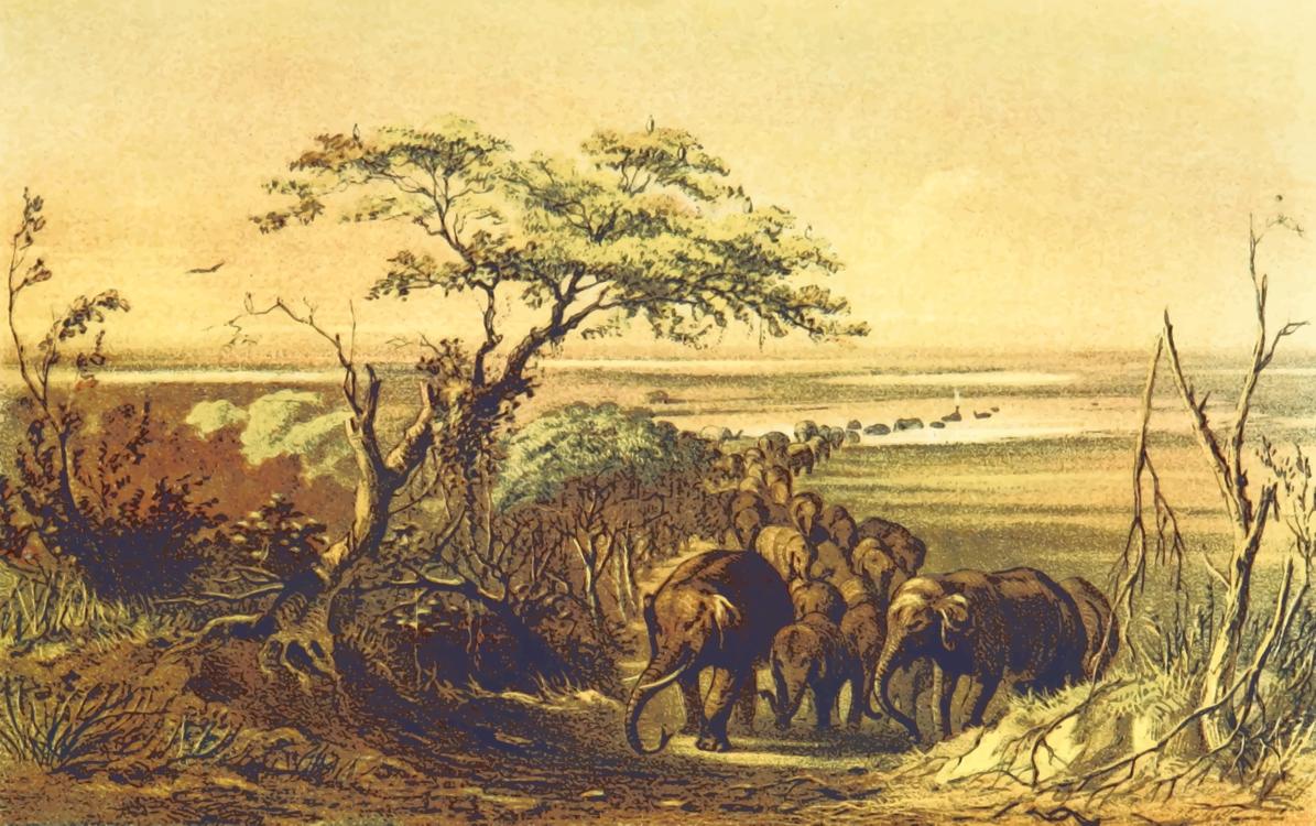 Wildlife,Ecosystem,Plant Community