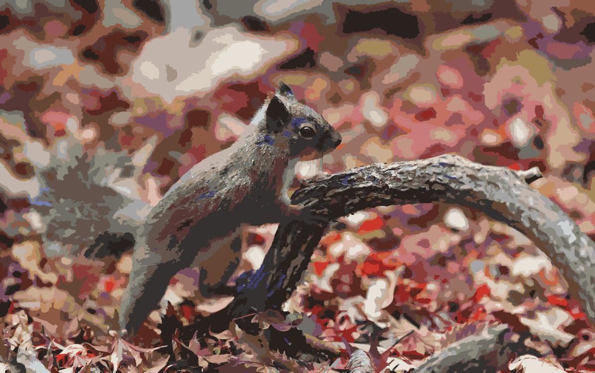 Squirrel,Chipmunk,Tree
