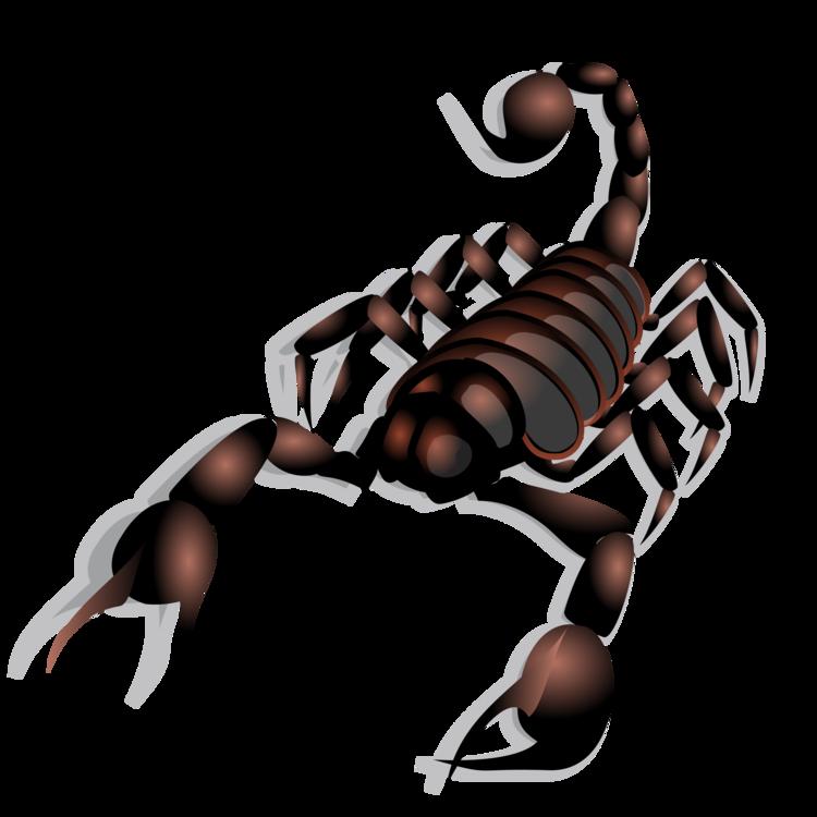 Scorpion,Invertebrate,Arthropod