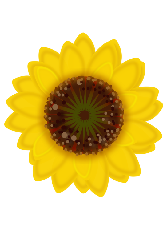 Sunflower Seed,Flower,Sunflower