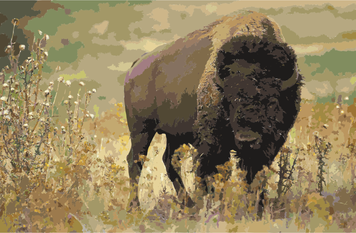 Wildlife,Grass,Ox