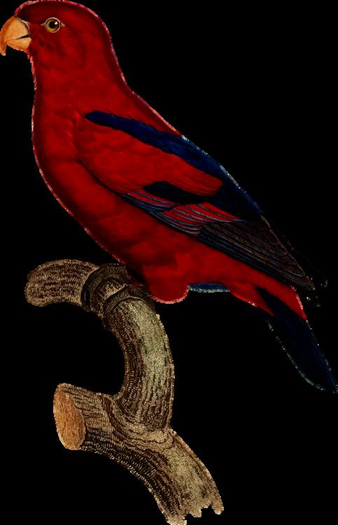 Macaw,Parrot,Beak