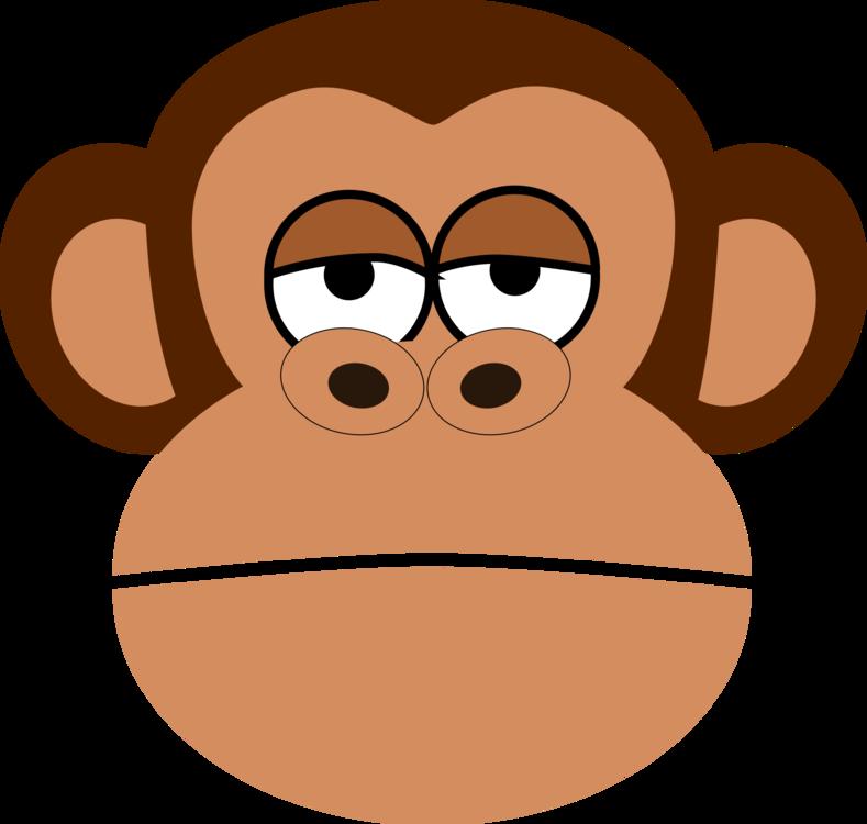 Head,Primate,Vision Care