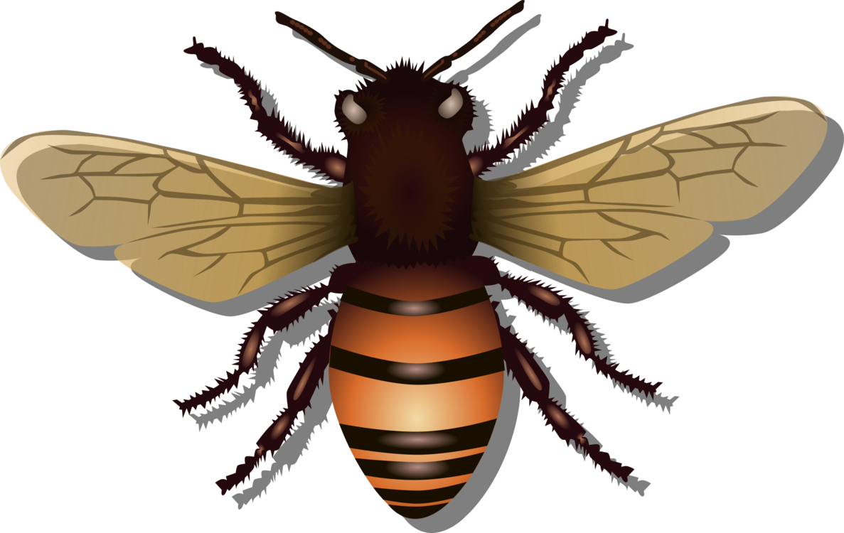 Fly,Honey Bee,Wasp
