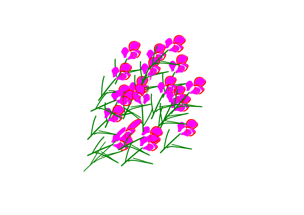 Plant,Flora,Pink Family