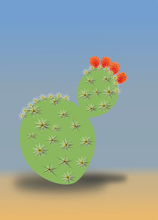 Plant,Flower,Caryophyllales