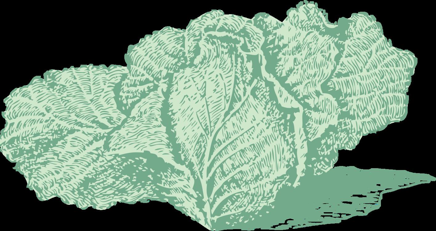Plant,Leaf,Tree