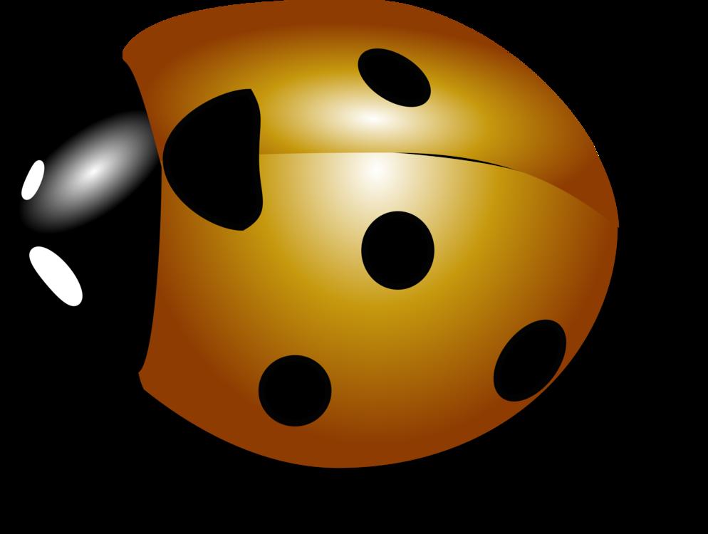 Ladybird,Yellow,Invertebrate