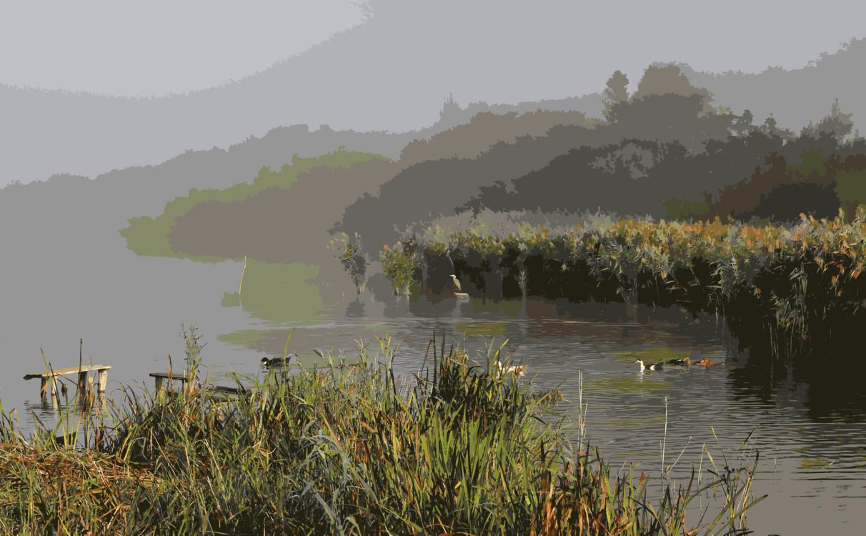 Reservoir,Loch,Grass Family