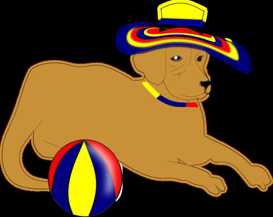 Ball,Carnivoran,Dog