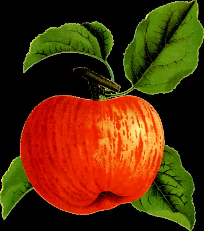 Apple,Food,Winter Squash