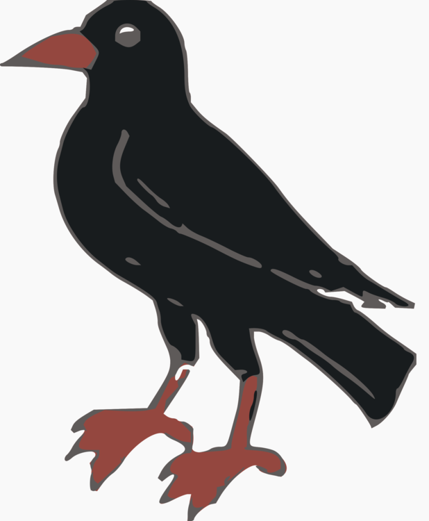 Crow Like Bird,Rook,Common Myna