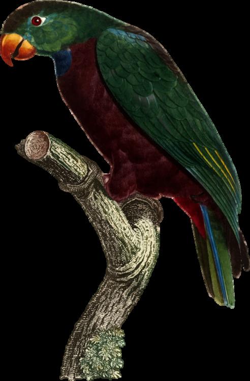 Macaw,Parrot,Bird