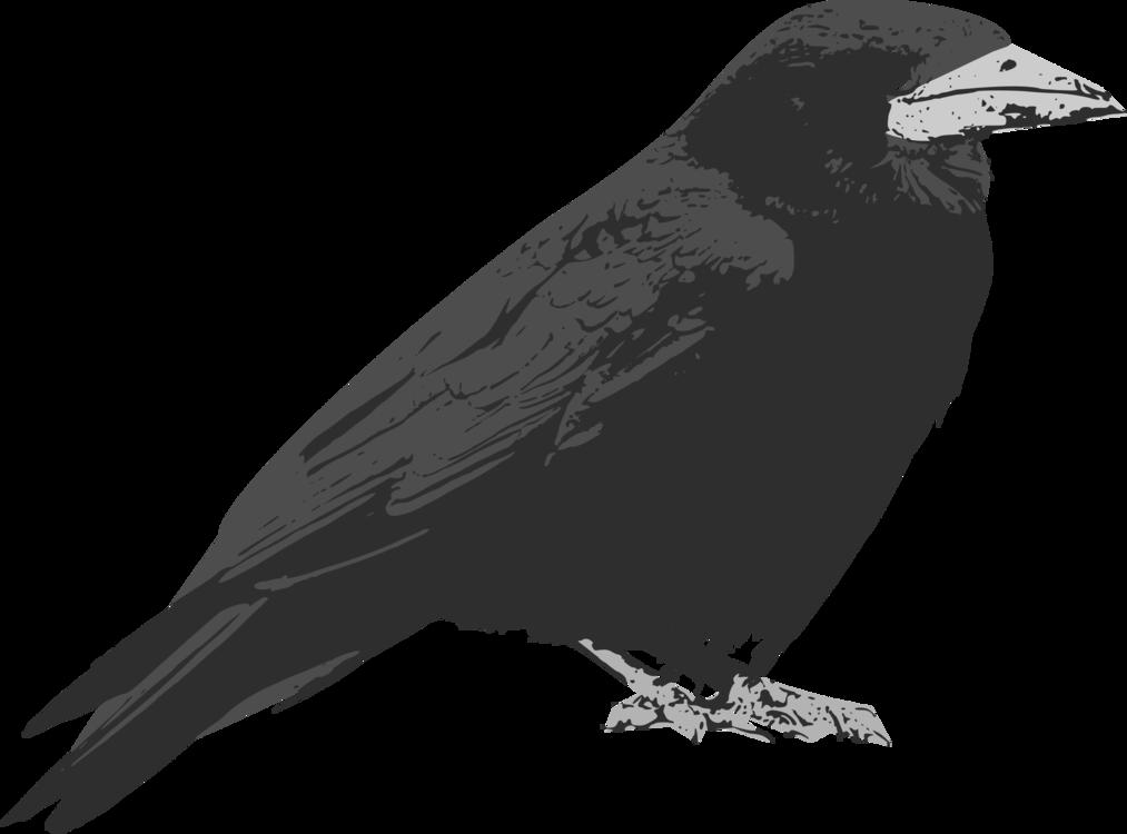 Perching Bird,Crow Like Bird,Rook