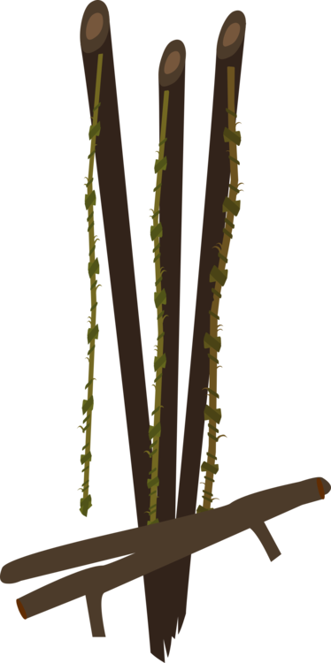 Plant Stem,Wood,Tree