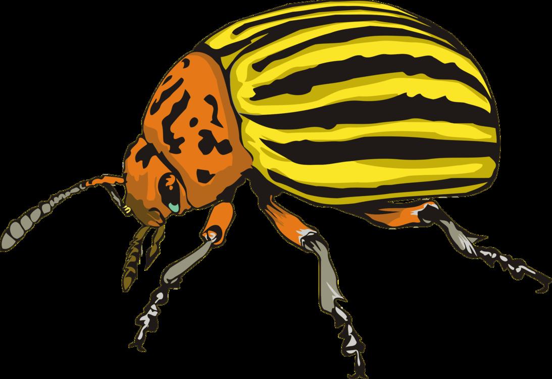Pollinator,Ladybird,Weevil