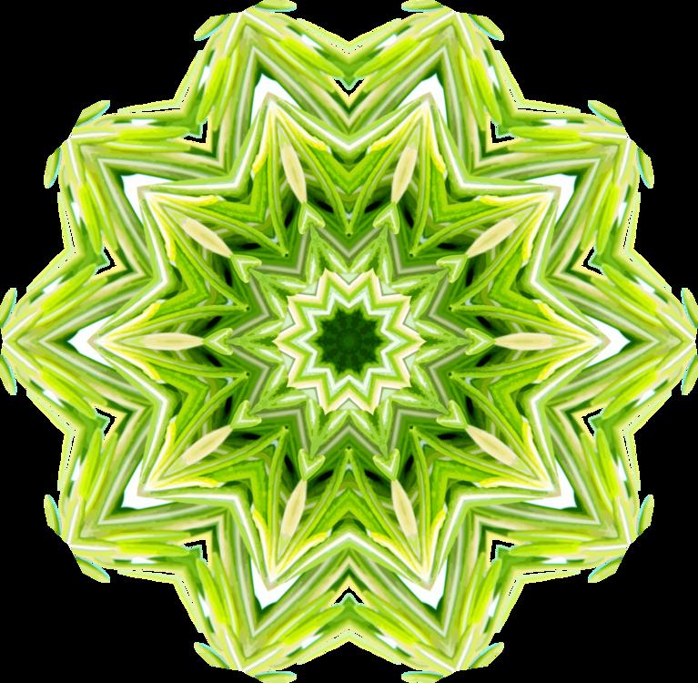 Symmetry,Tree,Line