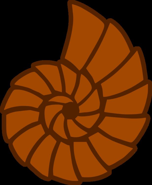 Nautilida,Flower,Food