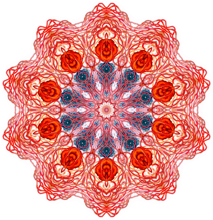 Petal,Flower,Peach
