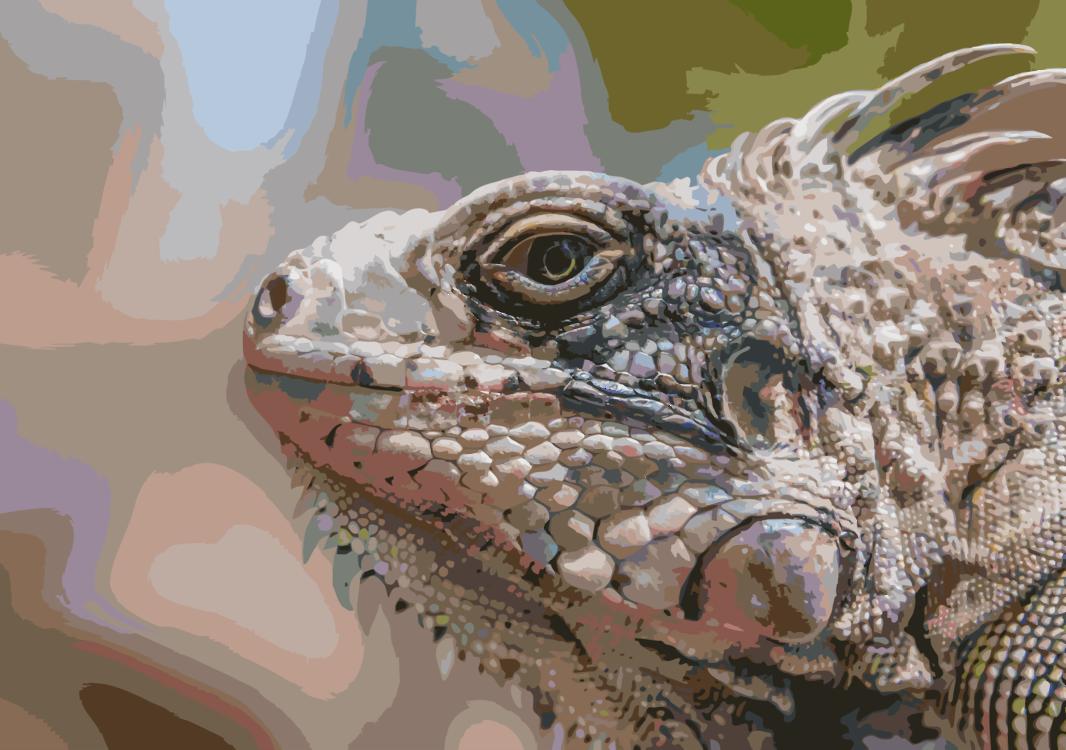 Reptile,Terrestrial Animal,Scaled Reptile