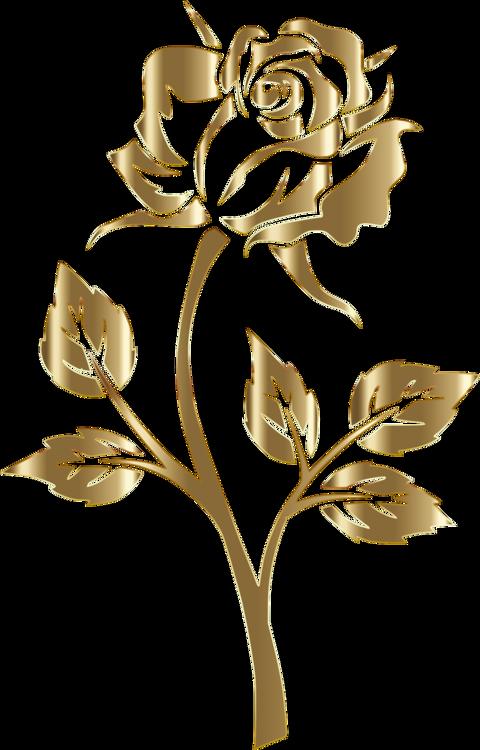 Plant,Flora,Rose