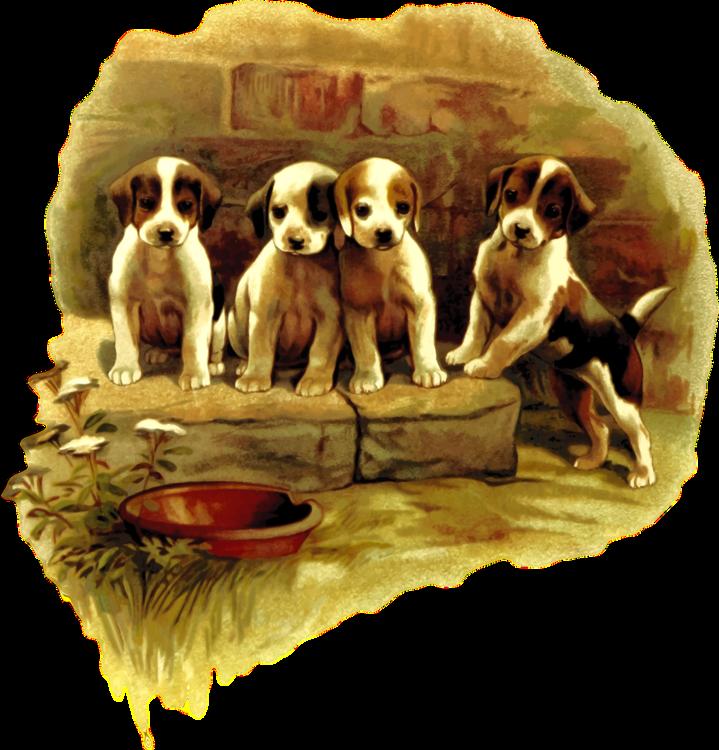 Puppy Love,Carnivoran,Dog