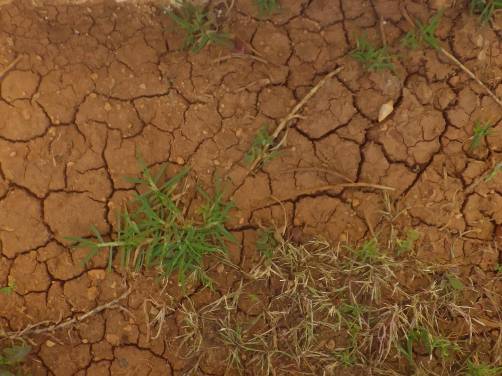 Plant,Soil,Grass Family