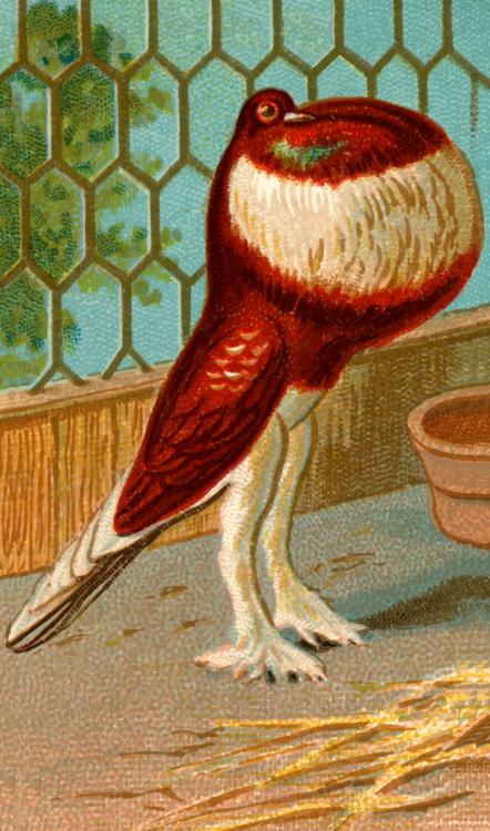 Art,Tail,Beak